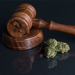 Read: The Cannabis Law & Policy Committee