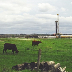 Frac Ranching vs. Cattle Ranching