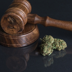 Read: The case for marijuana decriminalization